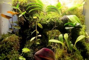 Dendrobium Terrarium